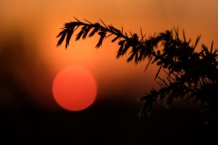 Sonnenuntergang Wacholderheide