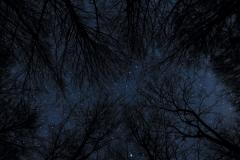 Baumkronen Sterne