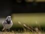 Kleinvögel