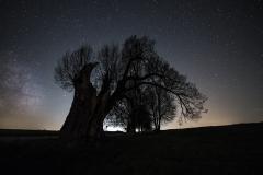 Anhauser Linde Sterne