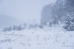 Dellenhäule Winter